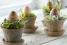 Easter Flowers & Decor / Easter | Seasonal | Flowers | Decoration | Inspiration | Wedding Flowers | Bouquets | Bridal Flowers | Eggs | Bunnies | Primroses | Daffodils | Narcissi | Catkins | Blossom | Tulips