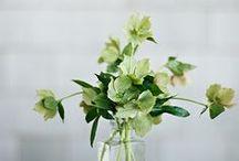 Spring Wedding Flower Guide / Wedding Flowers | Spring Flowers | Seasonal Flowers | British Flowers | Spring Flowers Inspiration