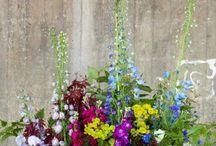 Seasonal British Wedding Flowers / Source beautiful seasonal British grown flowers for your wedding. Locally grown wedding flowers, bridal bouquets and flower arrangements .  Loads of #britishflowers ideas to pin & love @ www.greenunion.co.uk. Follow us for inspiration!