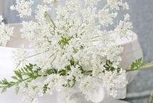 Summer Flower Guide / Seasonal British grown flowers for summer weddings
