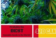 Cannabis Seeds / Take a look at some fab Cannabis Seeds.