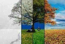 The 4 Seasons / My favorite seasons - I like all of them