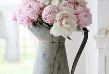 Pretty Florals / Various items that bring prettiness to a room (especially fresh flowers)