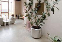 Planted / by drop it MODERN / GOOD STALK