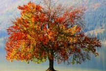 The Fall Season / The autumn colors are miracles of nature.