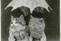 Harry Whittier Frees / Ne sont-ils pas mignons ces chatons ? On les doit au photographe américain Harry Whittier Frees (1879-1953), qui se fit connaître dans les années 1900 grâce à ses photographies d'animaux habillés et mis en scène. Les clichés de Frees conservés par la MAP appartenaient au photographe Noël Le Boyer.
