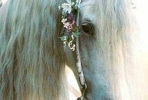 Beautiful horses / Cute