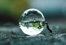 The Little Things / by Lynn Benincasa