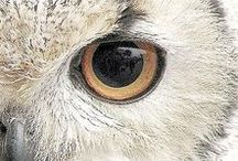 wisdom of an owl*
