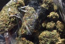 Marijuanas  / My favourite drug