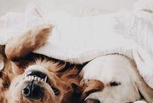 Hundefotografie / Hunde sind einfach die süßesten Tiere.