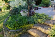 Fine Landscaping / by Suzanne S
