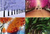 Seasons & Reasons to Celebrate / 4 seasons / by Darci McIltrot