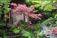 Garden designs: Chelsea Flower Show 2015 / Take a peek at the inspiring garden designs at Chelsea Flower Show 2015! / by Rated People