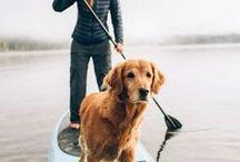 TRAVELER DOG. / Les chiens voyageurs (trop chou).