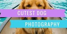Cutest Dog Photography / Collections of Cutest Dog Photography that are caught on cam!