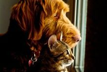 Best Friends ! / The purity of a person's heart can be quickly measured by how they regard animals!  / by Ana L M