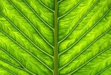 Go Green! / by Ana L M