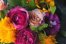 Gorgeous Flowers / by Jenna Taylor