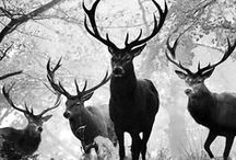 ★Deer / Love deers