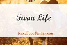 Living the Farm Life / Life on the farm, homesteading projects, raising a family of the farm. Farm lifestyle inspiration. #farmlife