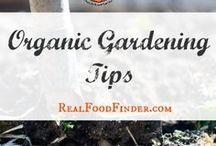 Organic Gardening Tips / Organic gardening for beginners and tips on how to grow your own food. #organicgardeningtips
