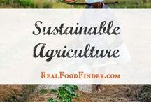 Sustainable Agriculture / sustainable agriculture projects and ideas. Why sustainable agriculutre matters. #sustainableagriculture