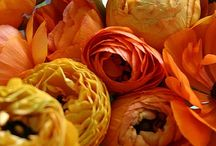 Orange Energy / by April Walker Nunn