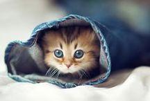 Cute / by Serena Clark
