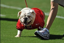 GO DAWGS / by Jane McKissick Carter