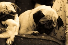 Pug Love / by Patience