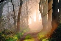 Nature wonderland