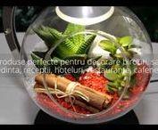 Wonderful Terrarium / Obiect de decor de mare impact & cadoul perfect pentru orice fel de ocazie…pes curt: confort si stil!  Detalii pe: Site: www.wonderfulterrarium.ro Facebook: www.facebook.com/wonderfulterrarium.ro Film_1 de prezentare (HD): https://www.youtube.com/watch?v=R-6v2OGUPcU Film_2 de prezentare (HD): https://www.youtube.com/watch?v=fe5i_mXCitY EcoKit: www.wonderfulterrarium.ro/prezentari/WonderfulTerrarium_eco_kit.pdf Lista preturi 2017: www.wonderfulterrarium.ro/prezentari/preturi2016.pdf