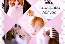 Gatoomada Athinas / Adopt a greek cat