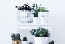 Dekoration / Dekoration, DIY, kreative Ideen, Pflanzen