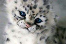 Cute animals❤️❤️❤️