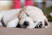 Štěňátka pro radost / puppys, dogs, cute