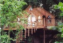 :: Incredible Tree Houses ::