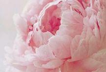:: Les Fleurs ::