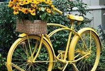 Yellow Pic