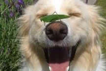 Animais❤️ / Cães ensinem seus donos o que é o amor!