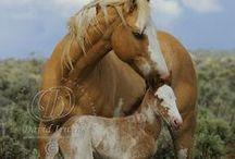 Horses / horses, photos of horses