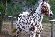 Konie :)