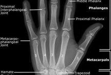 Toimintaterapia käsi