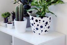 GARDEN & PLANTS / by Portia Lawrie