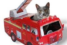 My cat needs this! / by Wendy Brittain