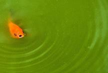 Colour Schemes, Orange Green