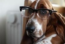 Hush Puppy Love / Basset Hounds