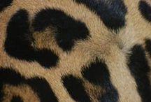 Wild as xx / Release your animal instincts.  http://www.mexx.com