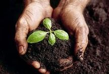 Gardening Inspiration / by Jules Booker